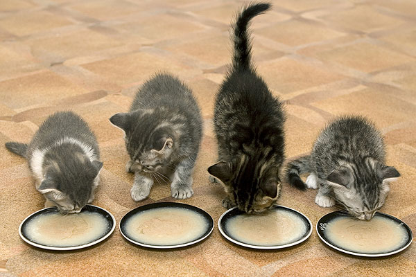 kittens-and-foods-1